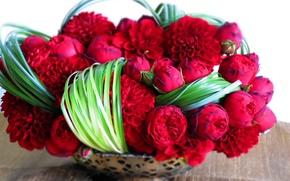Картинка трава, ваза, Розы, георгины