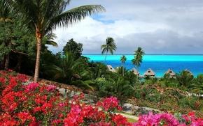 Картинка цветы, пальмы, Океан, Бунгало