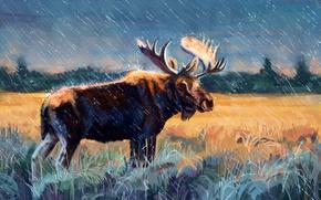 Обои лес, сохатый, трава, рога, поле, рисунок, дождь, лось