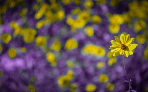 Картинка цветок, макро, желтый, роса, боке