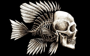 Картинка череп, текстура, skull