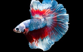 Картинка blue, fish, flakes