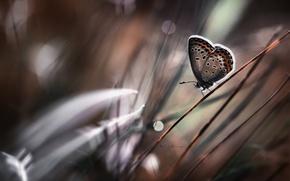 Картинка боке, трава, бабочка, стебель