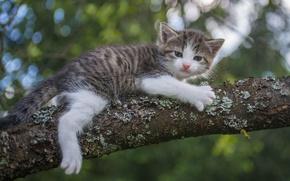 Картинка взгляд, дерево, милый, котёнок