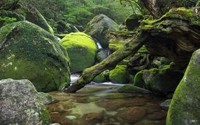 Картинка лес, деревья, река, камни, поток, Япония, Japan