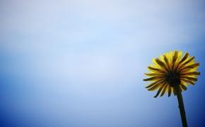 Картинка цветок, цветы, желтый, фон, голубой, widescreen, обои, wallpaper, широкоформатные, background, полноэкранные, HD wallpapers, цветочек, широкоэкранные, ...