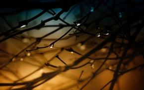 Картинка вода, макро, деревья, ветки, роса, фон, дерево, обои, капля, wallpaper, drop, широкоформатные, background, macro, tree, …