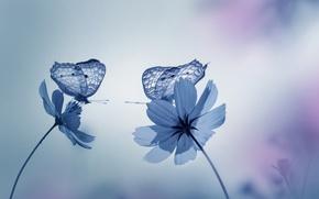 Картинка бабочки, цветы, природа, сад, Синие тона