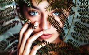 Картинка взгляд, листья, девушка, макро, портрет, Andrea