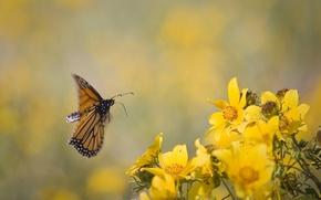 Картинка цветы, фон, в полете, желтые. бабочка