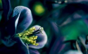 Картинка цветок, растение, весна, лепестки, цветение, spring