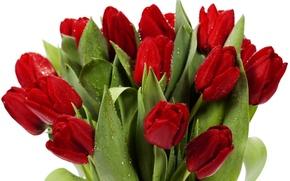 Обои tulips, flowers, bright, bouquet, red, petals, beauty, цветы