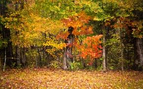 Обои осень,  деревья,  листья,  красочно