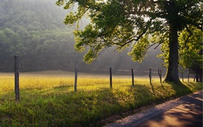 Обои дорога, трава, солнце, лучи, природа, туман, дерево, рассвет, забор