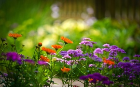 Картинка лето, растения, яркие цвета