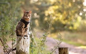 Картинка кошка, взгляд, природа