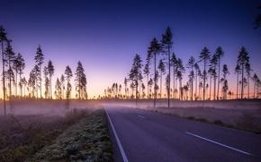 Картинка дорога, природа, туман