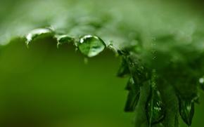 Картинка зелень, капли, лист