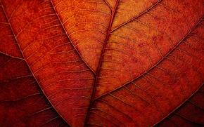 Картинка осень, лист, текстура, рыжий
