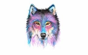 Картинка морда, краски, волк, wolf