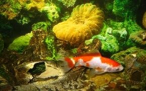 Картинка вода, рыбки, аквариум, рыбка, дно, рыба