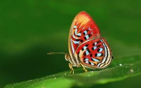Картинка природа, бабочка, краски, мотылек, кралья