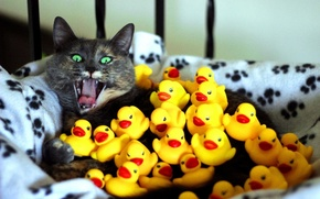 Картинка кошка, кот, желтый, испуг, зеленые глаза, уточки