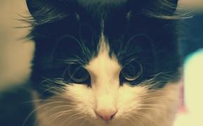 Картинка взгляд, черно-белая, Кошка