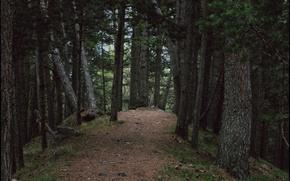 Картинка лес, весна, эльбрус