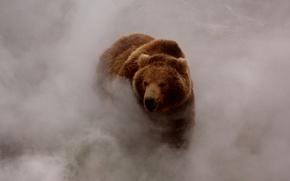 Картинка туман, дым, медведь, бурый
