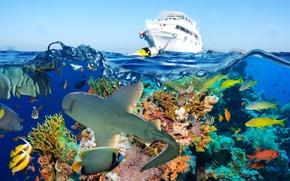 Картинка рыбы, море, кораллы, акула, яхта, подводный мир