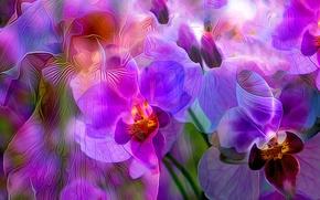 Обои цветы, лепестки, линии, краски