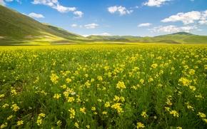 Картинка Небо, Природа, Лето, Поля, Рапс