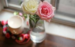 Картинка цветы, розовая, розы, белая