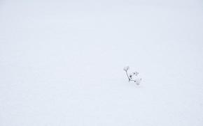 Картинка зима, трава, снег