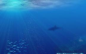 Вода, океан, рыбы обои