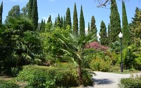 Картинка Цветы, Лето, Пальмы, Парк, Абхазия, Кипарис