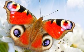 Картинка небо, цветы, природа, бабочка, крупным планом