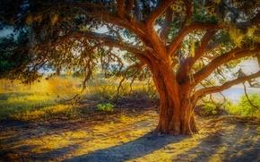 Картинка трава, закат, ветки, дерево, hdr, ствол