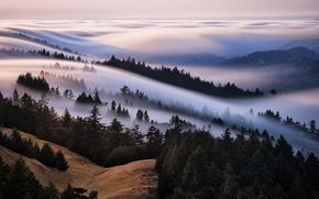 Картинка лес, небо, туман, холмы, море тумана