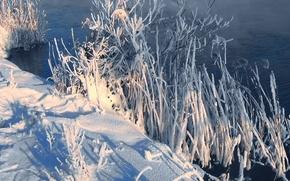 Картинка зима, иней, снег, туман, Река, камыш