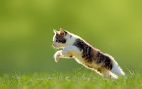Обои трава, прыжок, котёнок