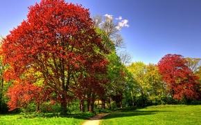 Картинка трава, деревья, парк, солнечно