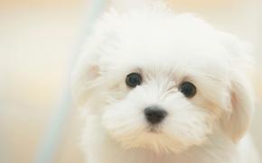 Картинка взгляд, макро, друг, собака