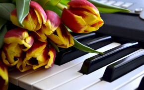 Картинка Цветы, Тюльпаны, Клавиши