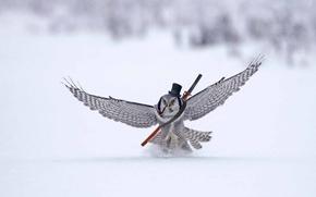 Картинка полет, сова, крылья, трубка