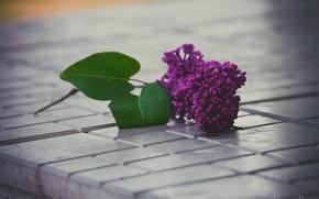 Обои цветы, дом, сирень, весна