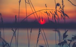 Картинка трава, солнце, макро, закат, природа, травинка, колосок