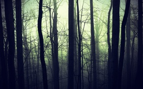 Картинка лес, природа, туман, темнота