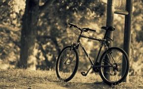Картинка листья, деревья, природа, велосипед, фон, дерево, widescreen, обои, спорт, размытие, wallpaper, bicycle, разное, nature, широкоформатные, …